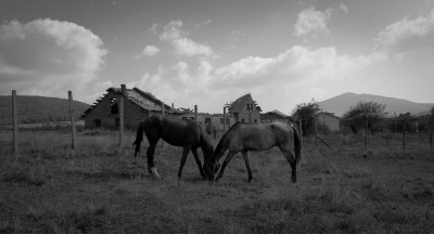 Two Horses, One Head / Makotzevo 2008