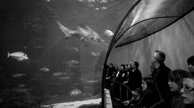 Aquarium Tunnel / Barcelona 2009