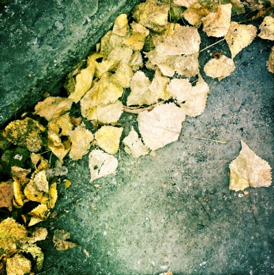 Leaves / Unknown location 2012