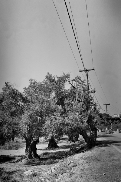 Olives and Electric Lines / Greece 2012