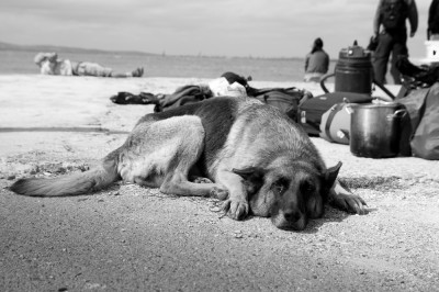 Faithful Dog / St Anastasia Island 2010