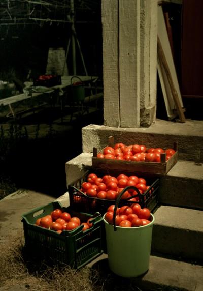 Tomato Crates / St Anastasia Island 2010