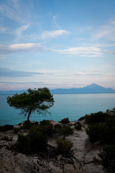 Tree and Aton / Sithonia, Greece 2009