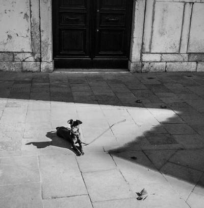 Dog in the Sun / Venice 2012